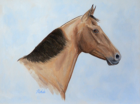 Tennessee Walker Walking Horse American 