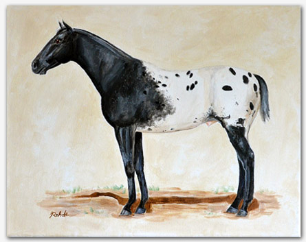 Original Appaloosa Horse Paintings For Sale : Chief of