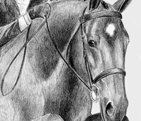 Show jumping hunter jumper warmblood dressage horse art