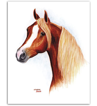 *Padron Arabian stallion horse art pictures paintings