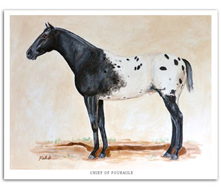 Chief of Fourmile Appaloosa horse art painting
