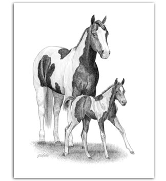 Paint Horse APHA mare foal pinto equine art