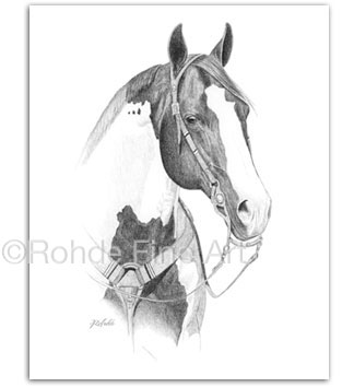 Paint Horse Portraits equine art