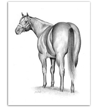 quarter horse drawing ...