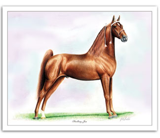 Strolling Jim - first TWH World Grand Champion Tennessee Walker horse art