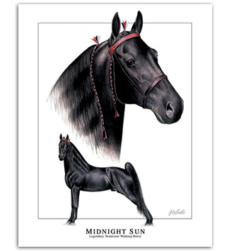 Midnight Sun Tennessee Walker horse art pictures Walking Horse painting