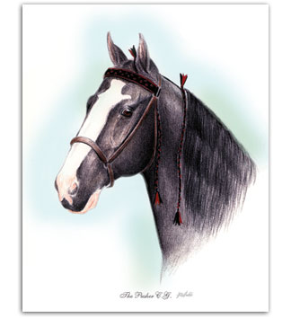The Pusher C.G. Tennessee Walker walking horse art pedigree pictures