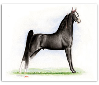 The Pusher CG Tennessee Walker horse art prints paintings