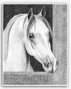 Arabian horse graphite art prints drawings framed