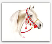 Grey white Arabian horse art paintings prints