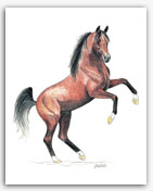 *Bask - Arabian horse stallion art prints paintings