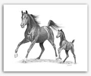 Arabian horse mare foal art prints graphite