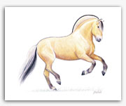 Norwegian Fjord pony horse art prints by Rohde equine artist