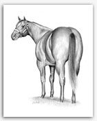Quarter Horse stallion art drawing prints