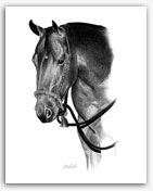 Bosal Quarter Horse western pencil art by Rohde