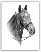 Tennessee Walker Walking Horse art prints drawing gifts decor