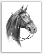 Tennessee Walker show horse TWH Art prints