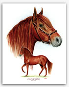 Capuchino Paso Fino stallion art painting prints
