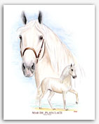 Mar de Plata LaCE Paso Fino horse art paintings prints