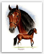 Hilachas Paso Fino horse art paintings