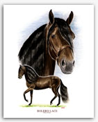 Bolero LaCE Paso Fino horse art prints paintings