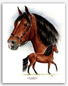 Lucerito Paso Fino horse art stallion prints paintings